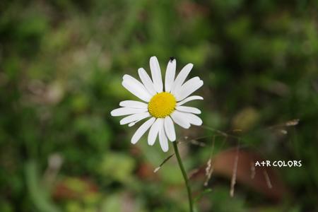 may_65.jpg
