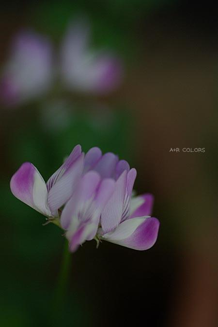 may_01.jpg